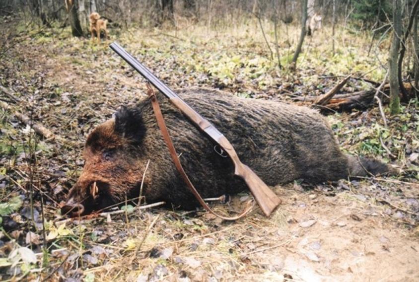 Безпрецедентна наглост! МОСВ номинира за награда най-големия бракониер на Тетевен и Рибарица!